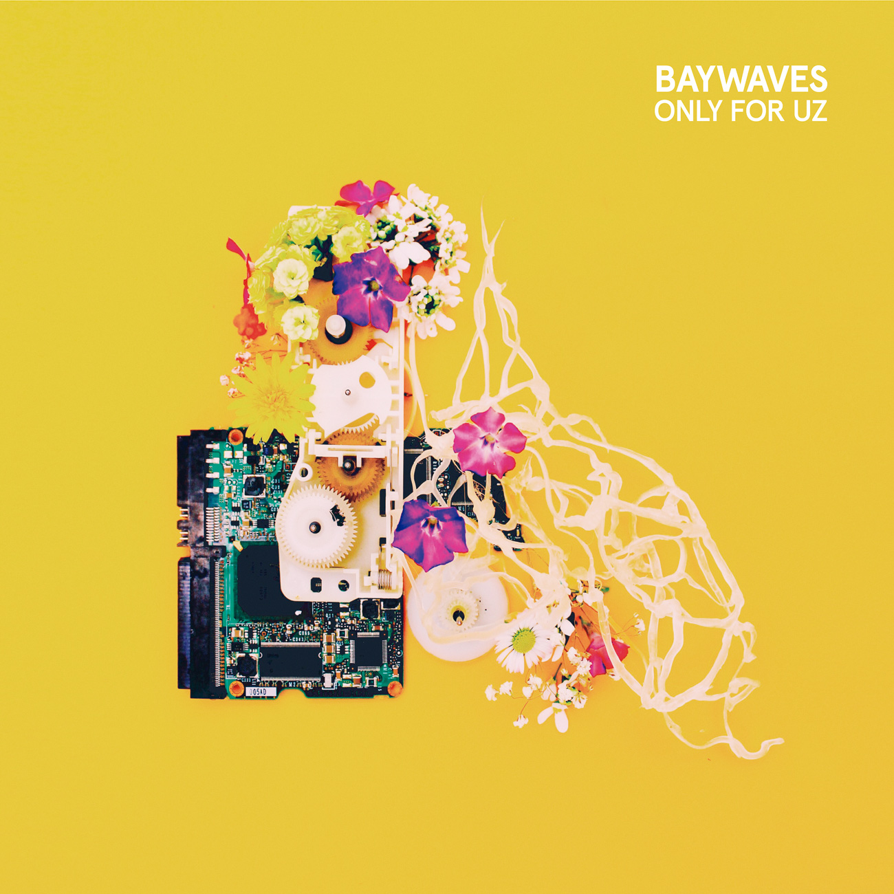 Baywaves